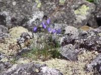 018 cvety neba