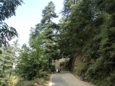 Огромные деревья! Так радостно видеть их...